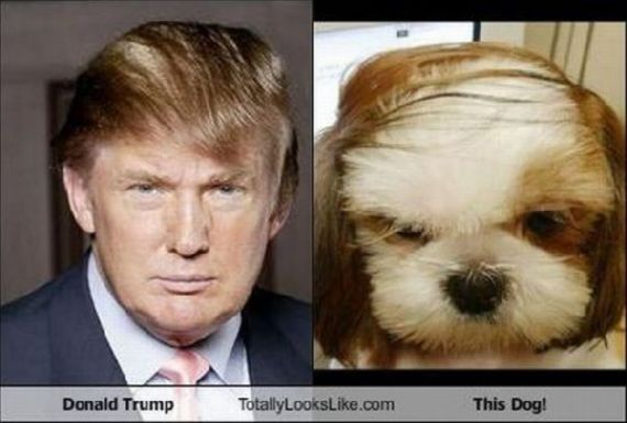 donald trump hairstyle. donald trump haircut 2011.