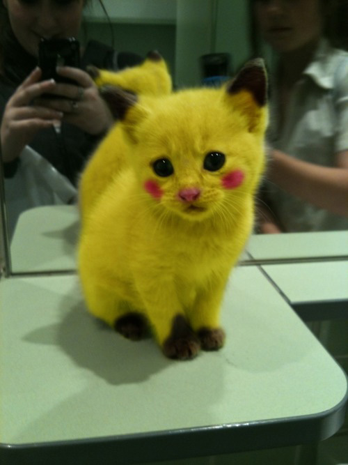 Cat made up to look like Pikachu