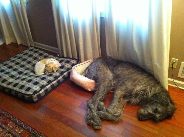 Little dog big dog