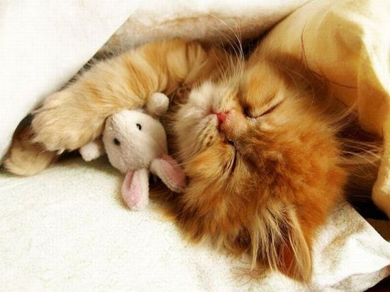 Cat cuddles stuffed animal mouse cute