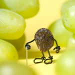 bent-old-grape
