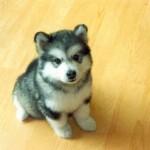 cute-puppy-4