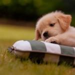 cute-puppy-5