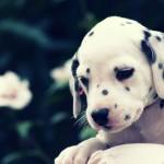 cute-puppy-6