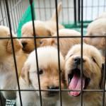 cute-puppy-7