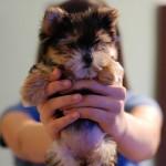 cute-puppy-8