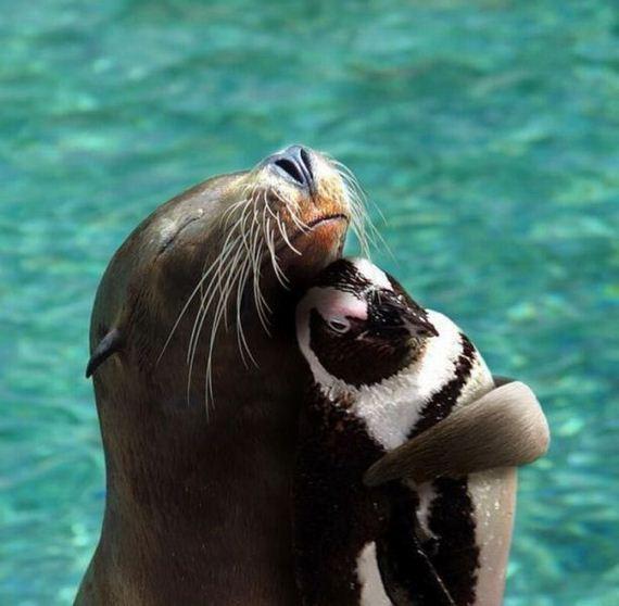 [Image: cute-sea-animals.jpg]