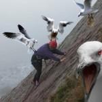 evil-birds