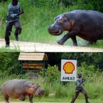 hippo-chase