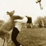 kangaroo-punch