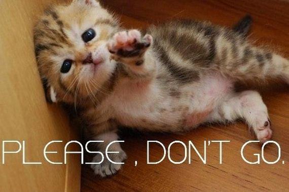 Go kitty go