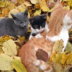 cat-loves-fall-02