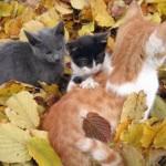 cat-loves-fall-02