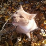 cat-loves-fall-03