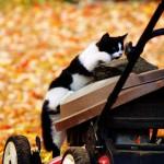 cat-loves-fall-04
