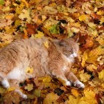 cat-loves-fall-05