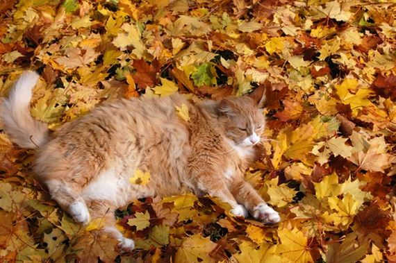 i Love You Cat Pictures Cat Loves Fall 05