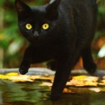 cat-loves-fall-06