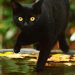 cat-loves-fall-06