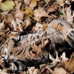 cat-loves-fall-07