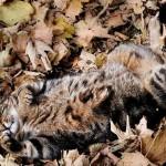 cat-loves-fall-07