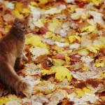 cat-loves-fall-09