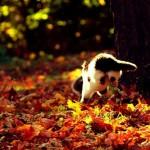 cat-loves-fall-10