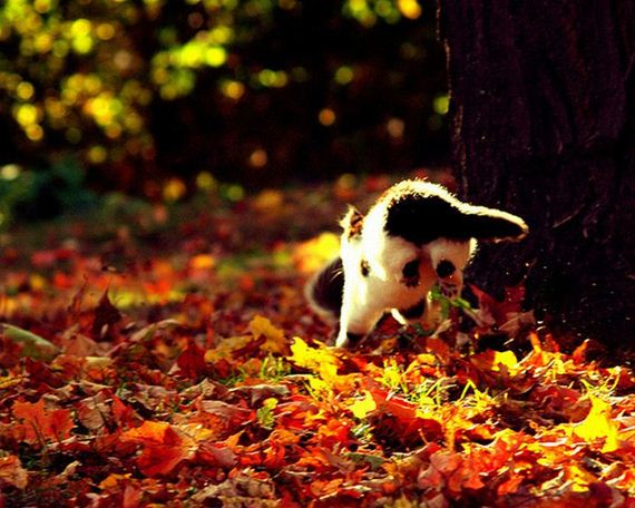 i Love You Cat Pictures Cat Loves Fall 10