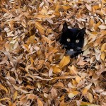 cat-loves-fall-11