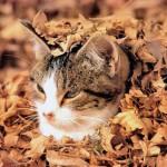 cat-loves-fall