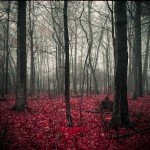red-forest-creepy-amirhassan-farokhpour