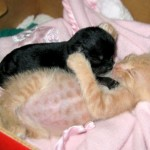 cat-loves-puppy-1
