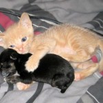 cat-loves-puppy-4