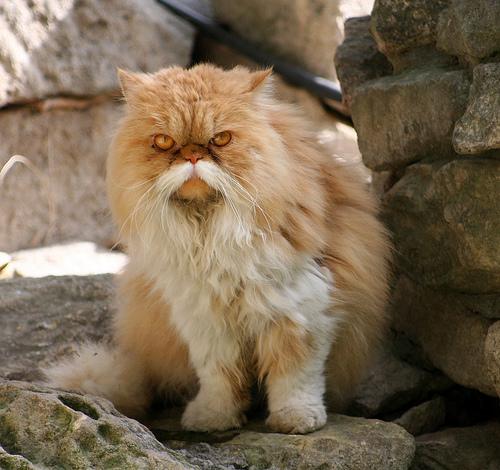 [Image: old-man-cat-moustache.jpg]