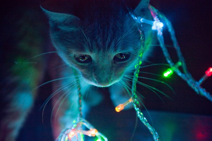 kitten in beautiful lights - evan's blog