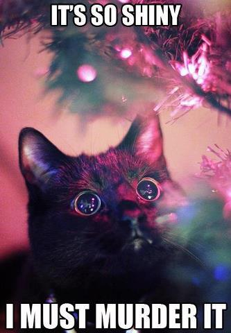 cats-during-christmas