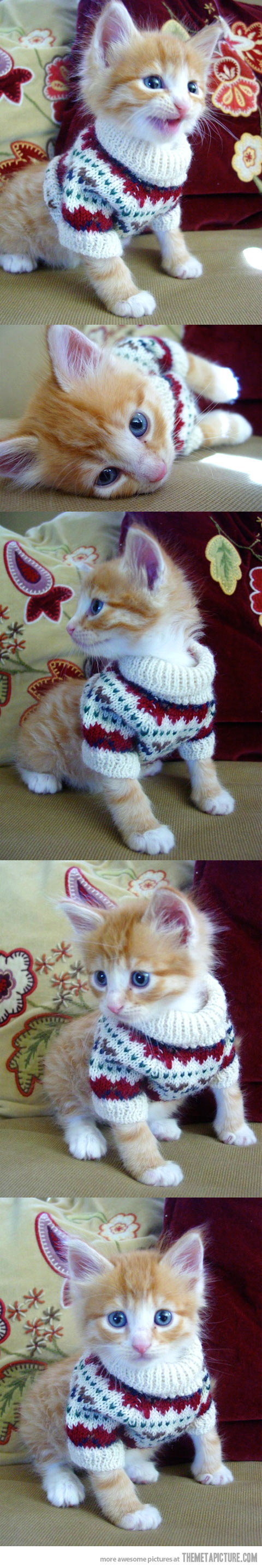 cute-kitten-sweater-clothes