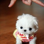 cute-tiny-dog