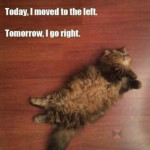 funny-fat-cat-sleeping