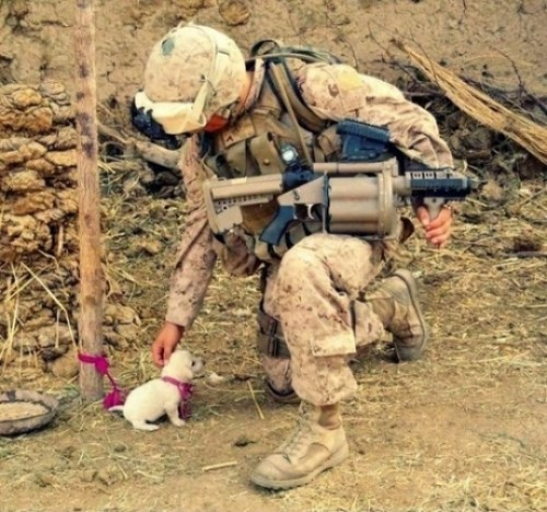 he-s-met-his-match-soldier-puppy-acc082db-sz500x468-animate